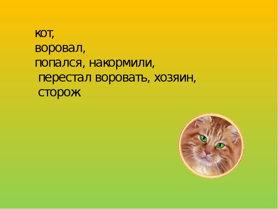 Кот воровал попался накормили