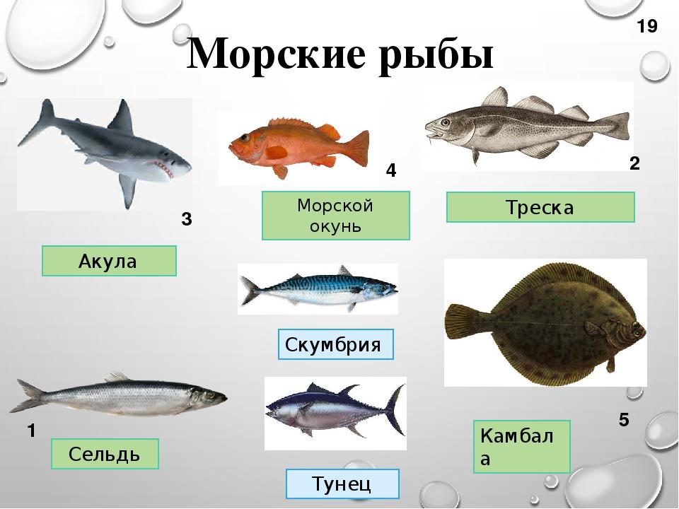 список речных рыб с картинками кому зачем