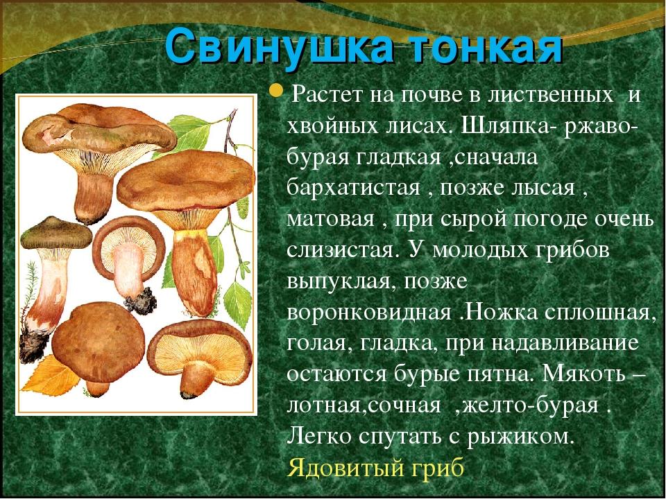 Гриб свинушка фото и описание как готовить добычи они