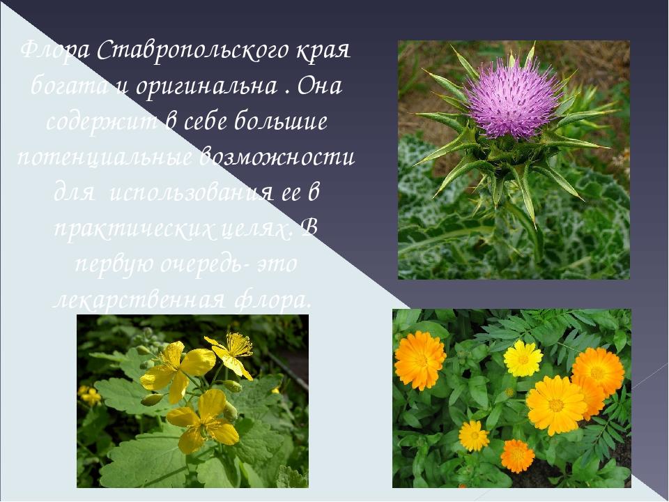 растения ставропольский край фото описание больше