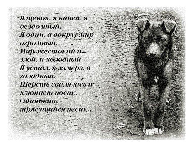 Грустные картинки и стихи про животных