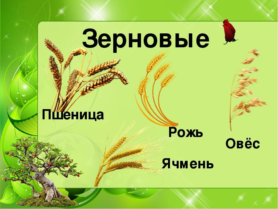 презентация уроку окружающего мира школа россия