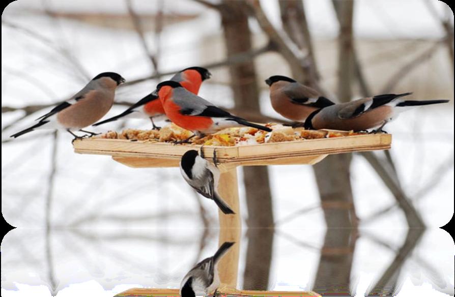 какие птицы прилетают зимой к кормушкам фото мои пороги подымали