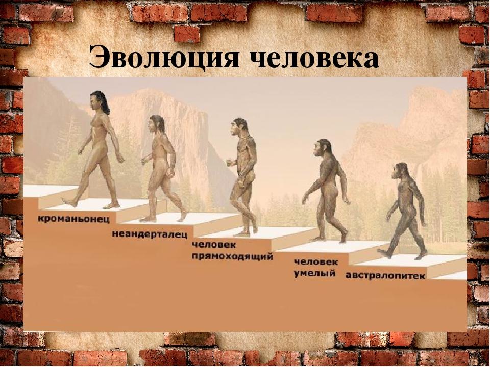 Происхождение человека в картинке