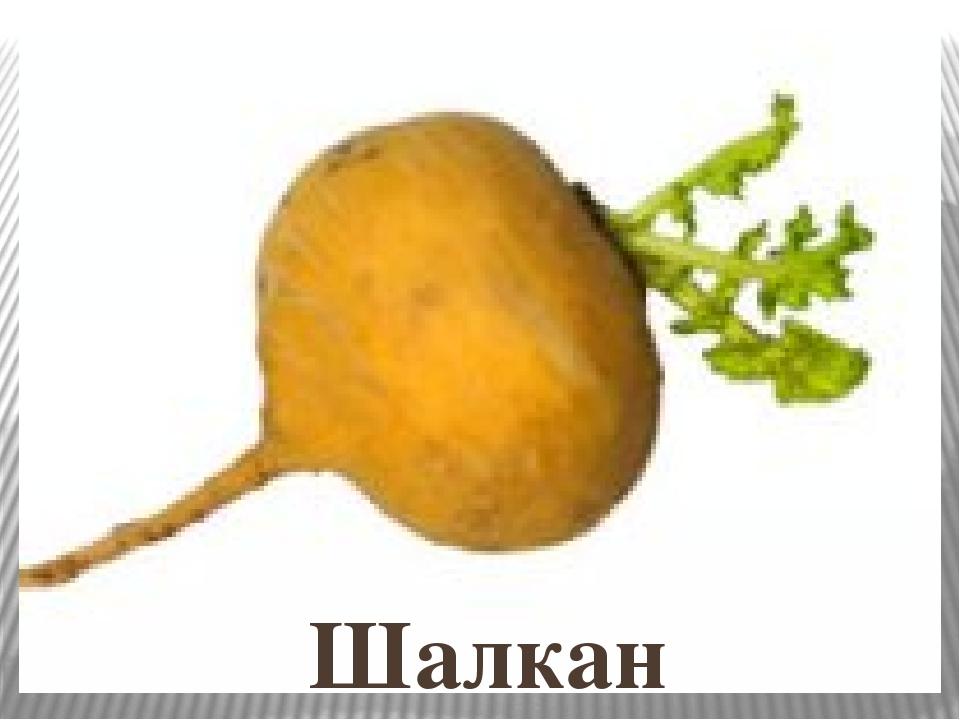 картинка репа и морковью