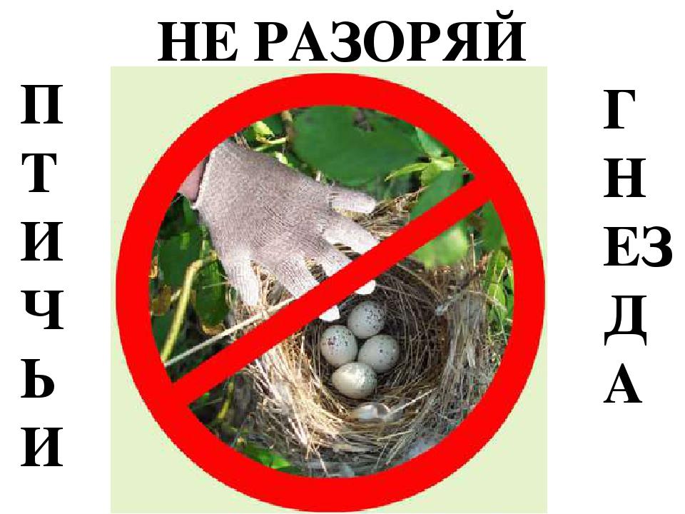 Знак не разоряй птичьи гнезда где можно встретить