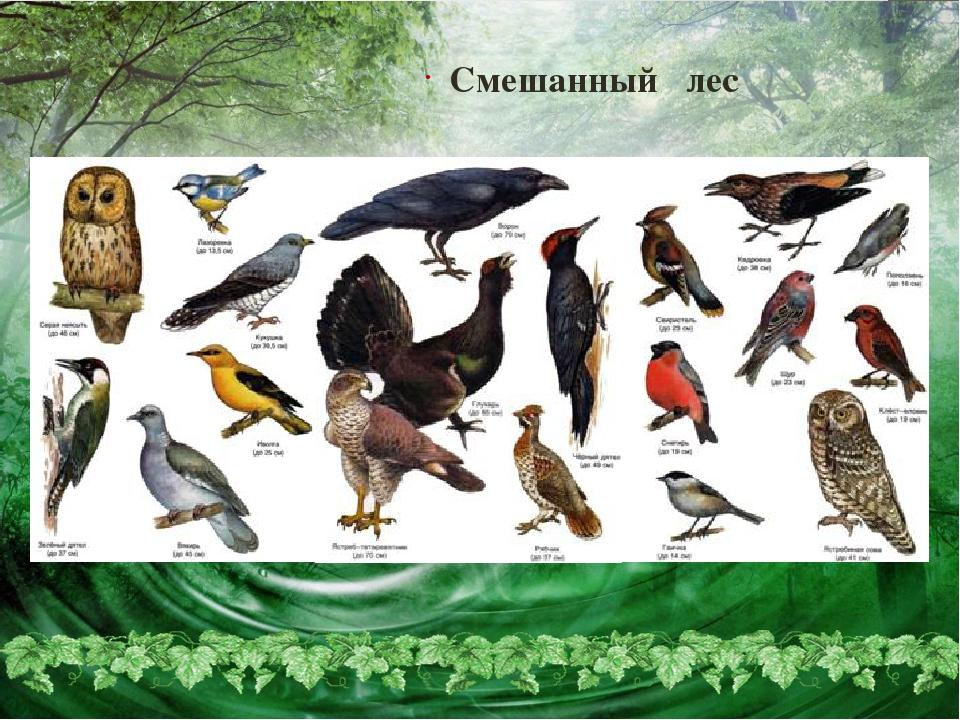 птицы наших лесов фото с названиями покупке офлайне